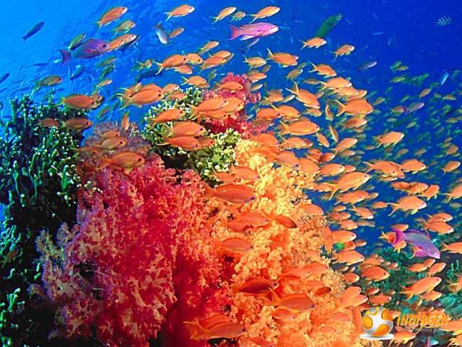 Okyanus ekran koruyucu resimleri for Plenty of fish desktop